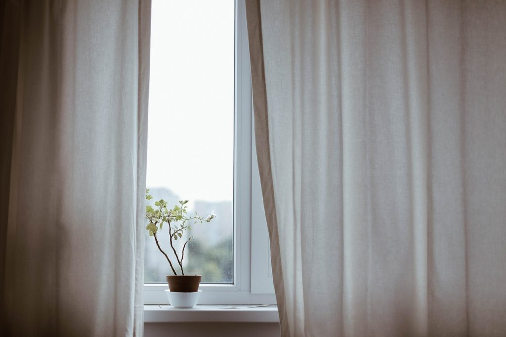 plant near the window