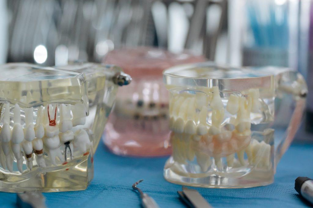 transparent model of teeth
