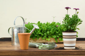 gardening tools and potted plant